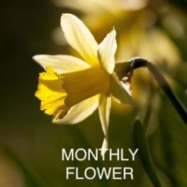MONTHLY FLOWER