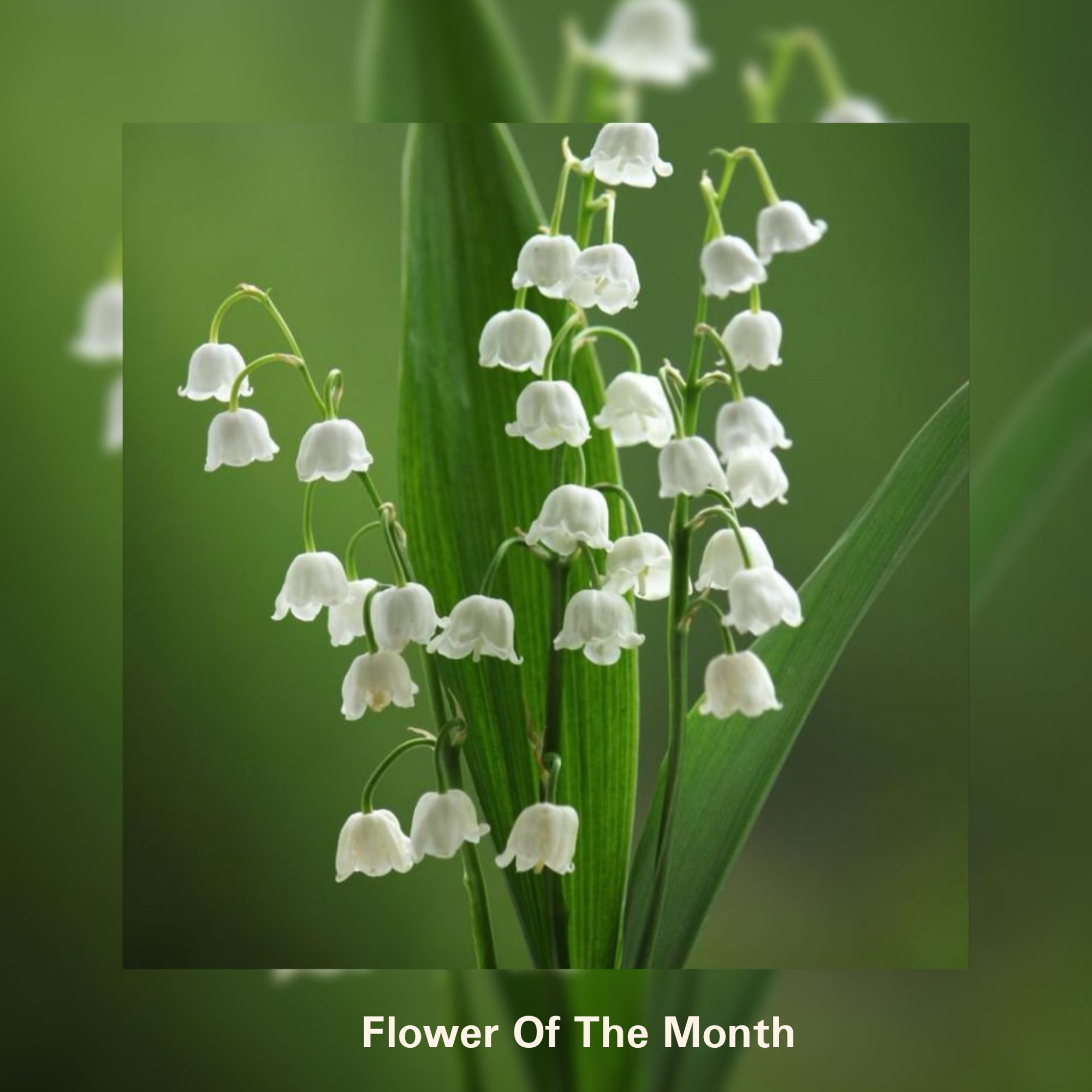 Flower Of The Month